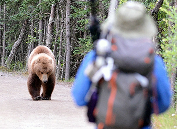 Hiker unexpectedly meets a bear in the woods (NPS Photo / Jake Bortscheller)